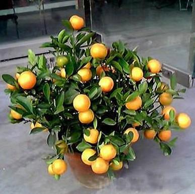 客厅植物摆放效果图 客厅空调摆放效果图 客厅鱼缸摆放效
